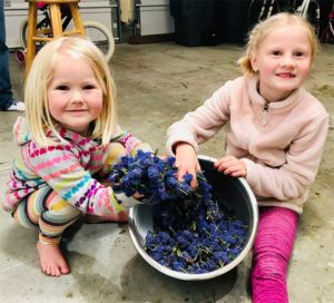 Girls Collecting Ceanothus