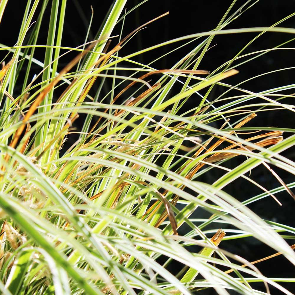 Landscape Design - Plant Detail 2