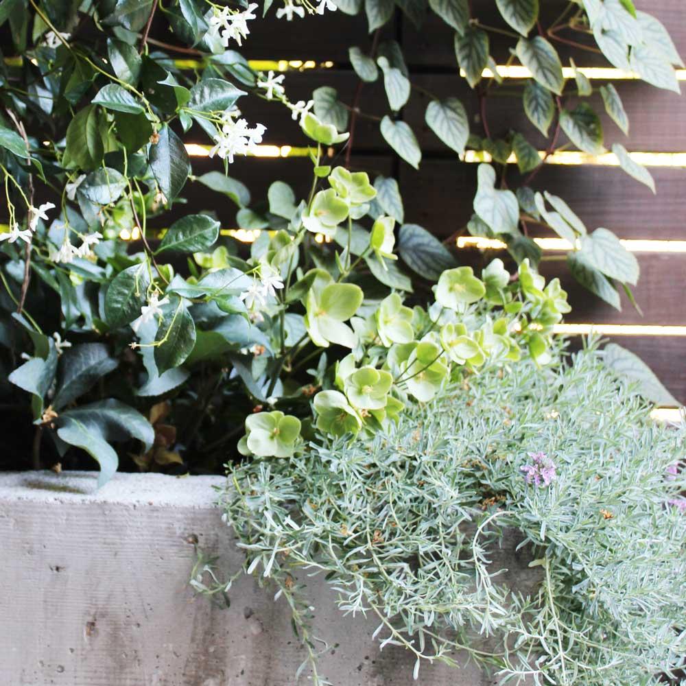 Landscape Design - Plant Detail 3