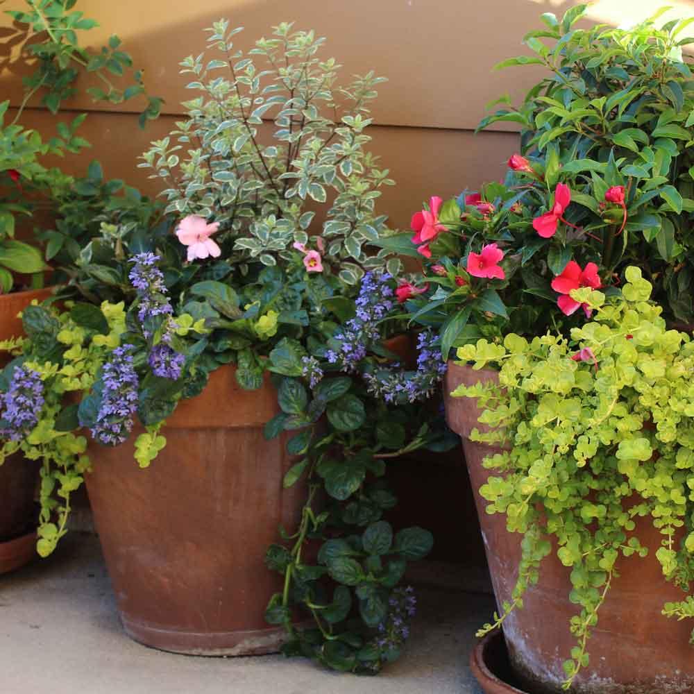 Landscape Design - Plants