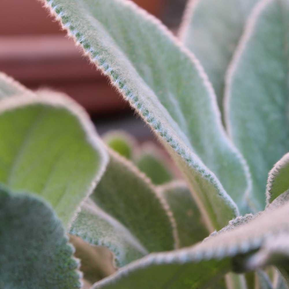 Connection - Plant 1